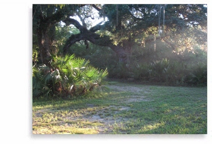 Retreat in a private cabin with Ayurveda and meditation on 25 acres of pristine Florida nature.